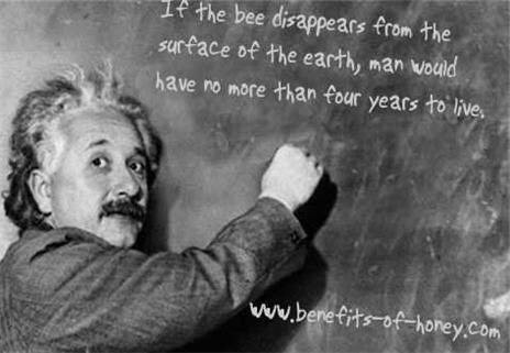 einstein bee quote