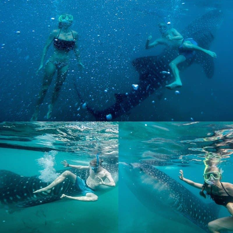 Whale-Shark-swimming-Olsob-Cebu-Philippines